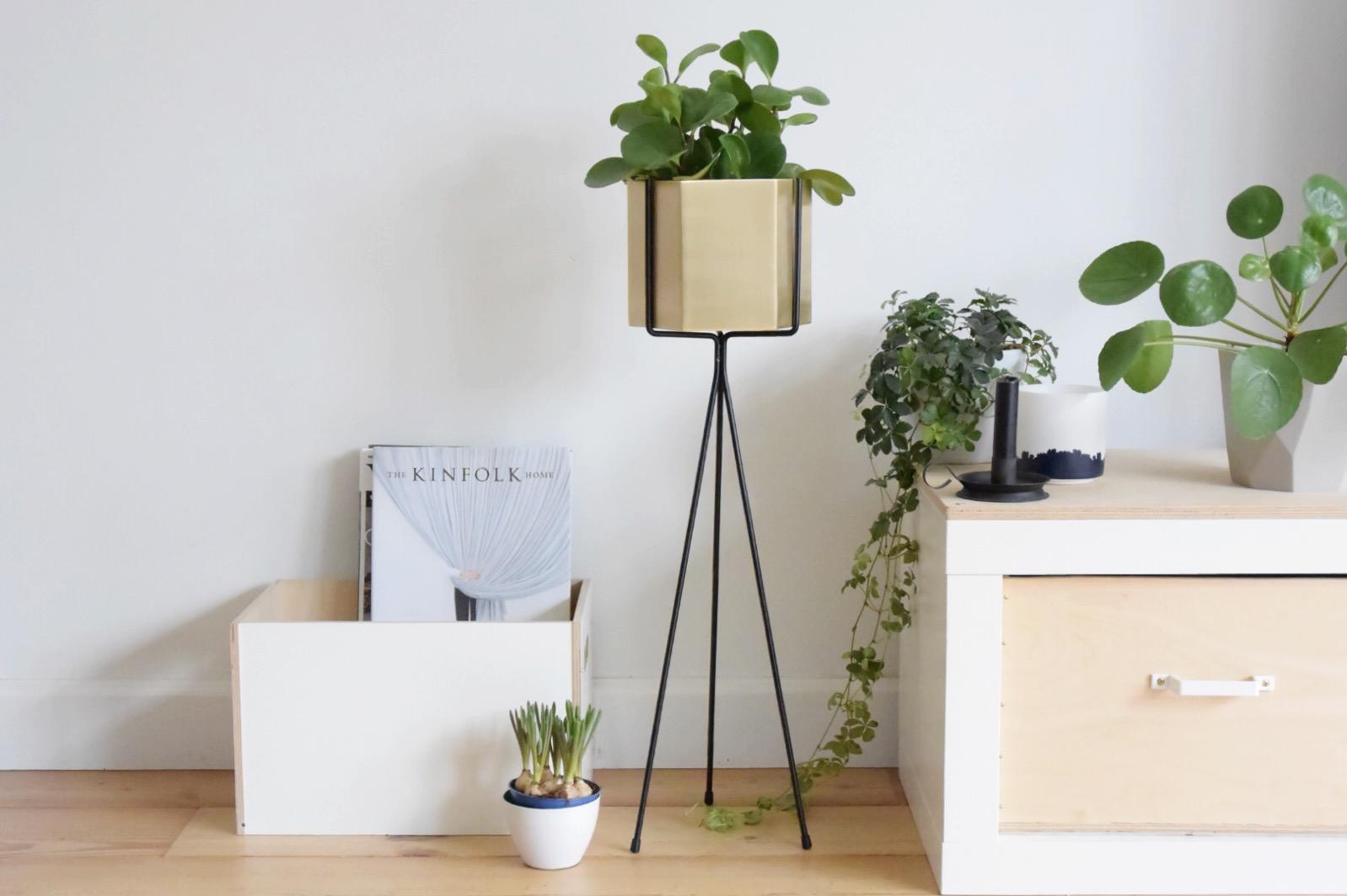 De plantenstandaard: terug van weggeweest