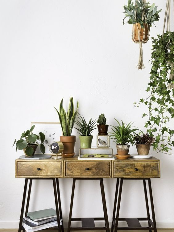 Dit zijn de nieuwste woontrends met planten
