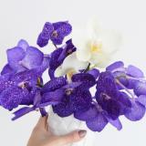 selinesteba.com - orchidee03.jpg