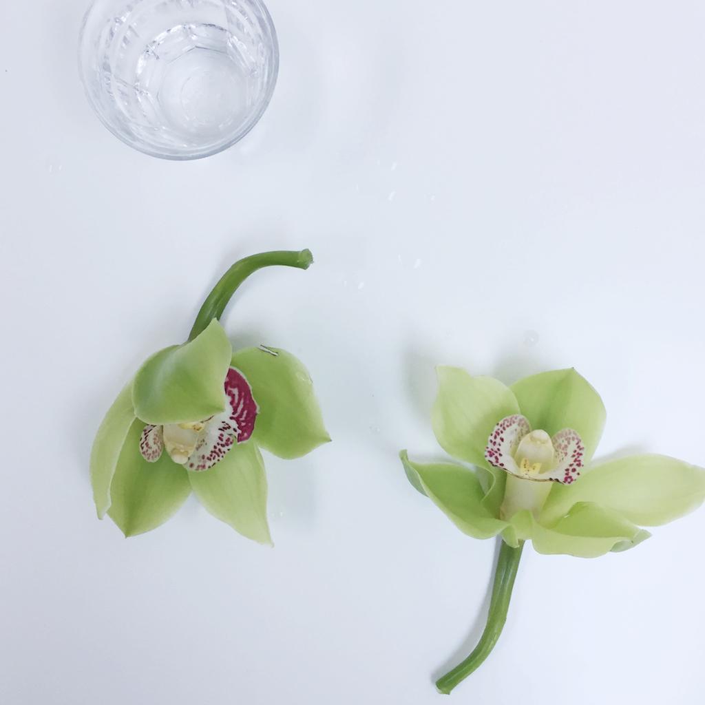 selinesteba.com - orchidee05.jpg