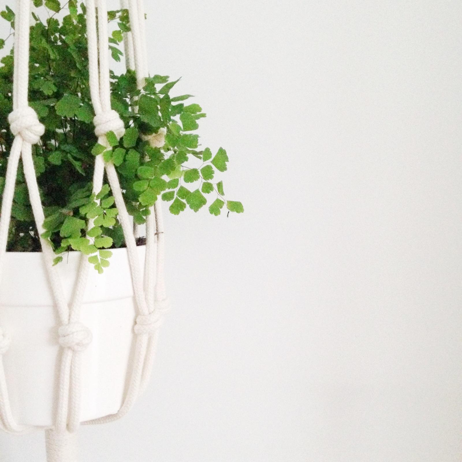 selinesteba.com - Snoeps hanger plantje