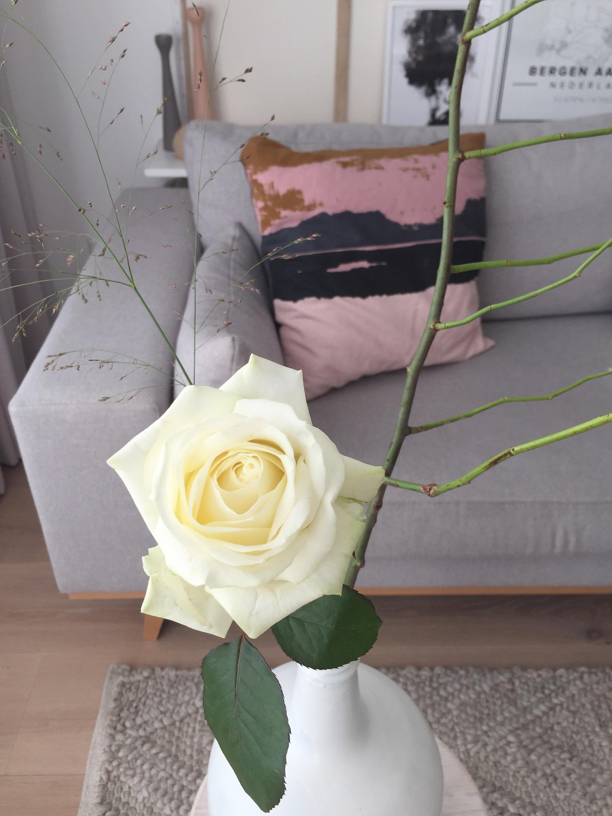 selinesteba.com - witte roos 02.JPG